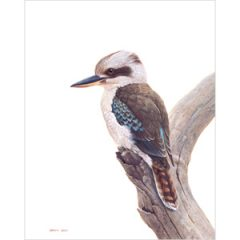 Laughing Kookaburra II