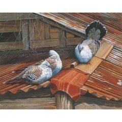 Pigeon Harmony