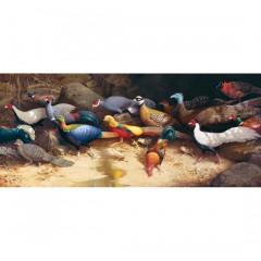 The Pheasant Run